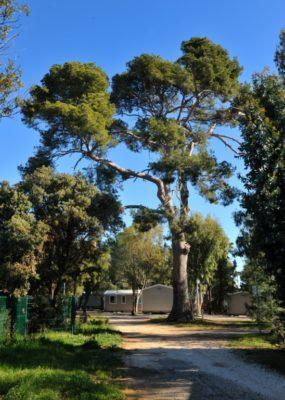 Camping Massif des Maures - Vacances Nature