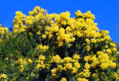 Camping Bormes-les-Mimosas - Vacances nature et fleuries