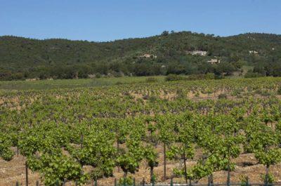 Camping vue sur les vignobles La Londe-les-Maures