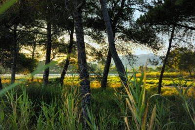 Hyères-les-Palmiers : les salins
