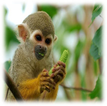 Visit The Tropical Zoological Garden In La Londe Les Maures With All
