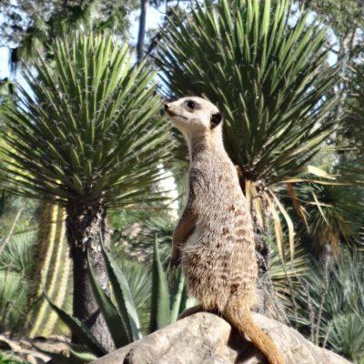 Visitez en famille le Jardin zoologique tropical de La Londe Les Maures