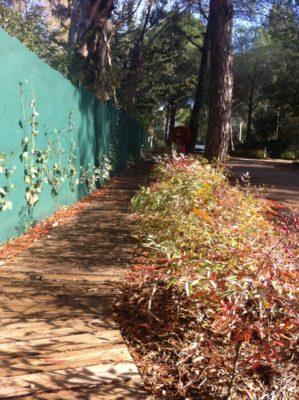 Camping près du Lavandou : nature calme et ombragé