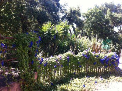 Bormes-les-Mimosas - camping nature écologique ombragé arboré