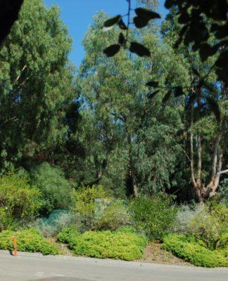 Camping à Hyères - nature et écologie, ombre et tranquillité
