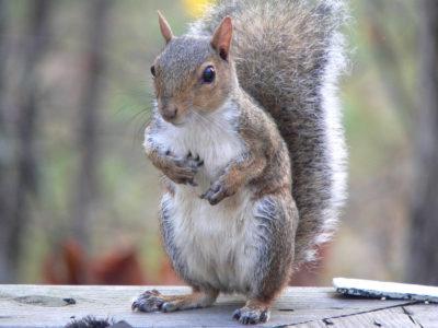 Écureuils au camping dans le Var