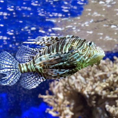 Partez à la découverte de la faune et de la flore de la mer Méditerranée