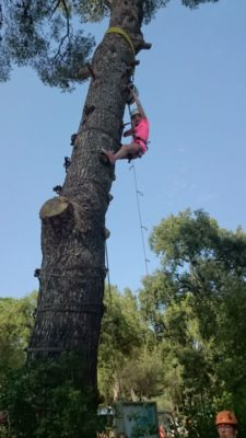 Escal'arbre au camping dans le Var - animations 8/12 ans