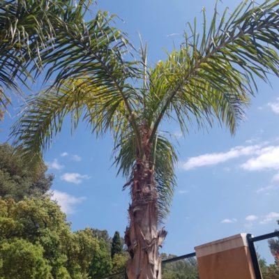 Camping près d'Hyères : les palmiers de la reine