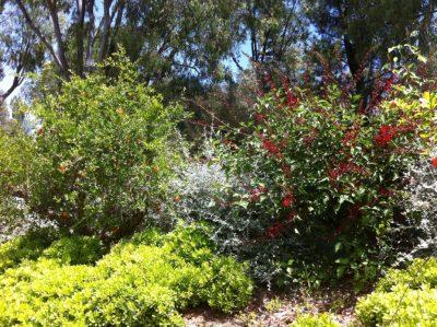 Vacances nature dans la végétation - Écologie