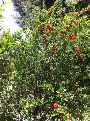 Végétation méditerranéenne, camping arboré